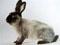 Сайт про кроликов)